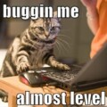 Even Cats Feel The Need To Play WoW